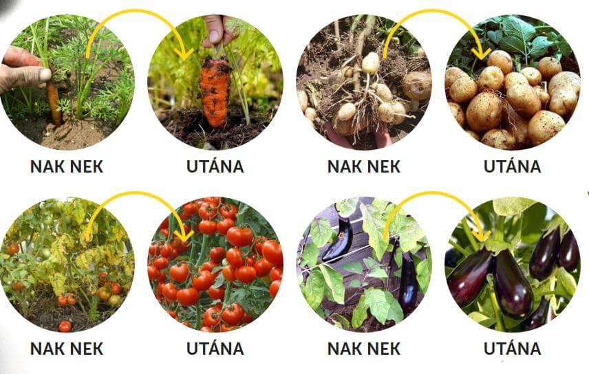 zöldségek, gyümölcsök