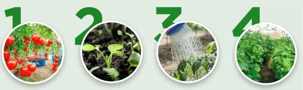 kertészet, műtrágya