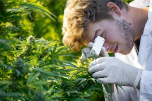 Mit tud a tudomány a Kannabisz előnyeiről – mítoszok és tények!