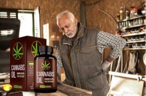 Cannabis Oil Felülvizsgálat – A kendermag olaj ízületi mobilitás és a magas vérnyomás!